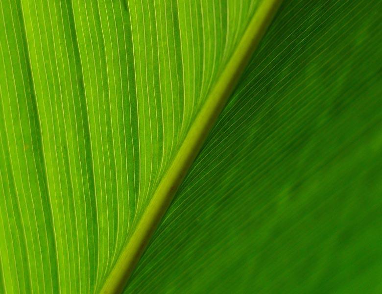 eco2-home-leaf