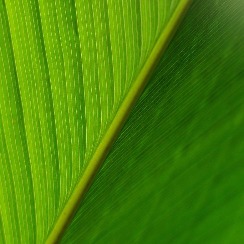 exo2-company-leaf2